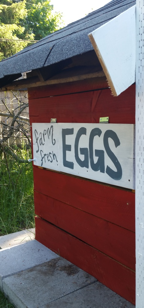 This door came from an on-the-side-of-the-road salvaged find.  When it is open, you can reach your hand in to the nesting boxes and grab the eggs.  Well, someday, when the chicks are full-grown, you can grab the eggs!